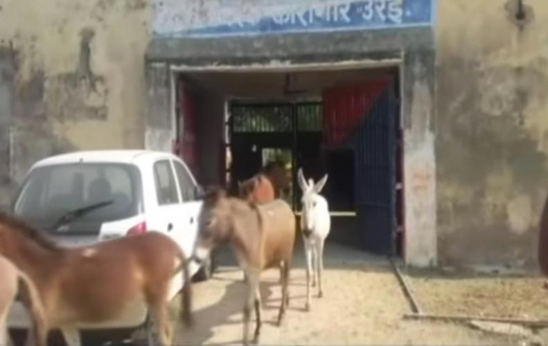 Ohhh ! Donkeys get jailed know why ? | know here all details