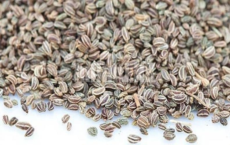 11 Health Benefits of Celery Seeds, Tips for using the Plant and Its Seeds