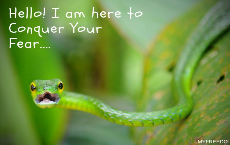 Cute Snake Photos | Truly Adorable that will Reduce Your Fear