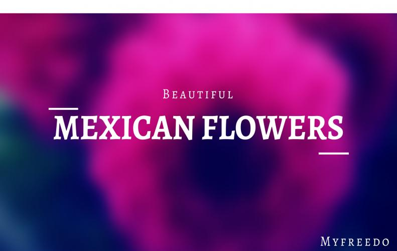 Top List of Mexican Flowers