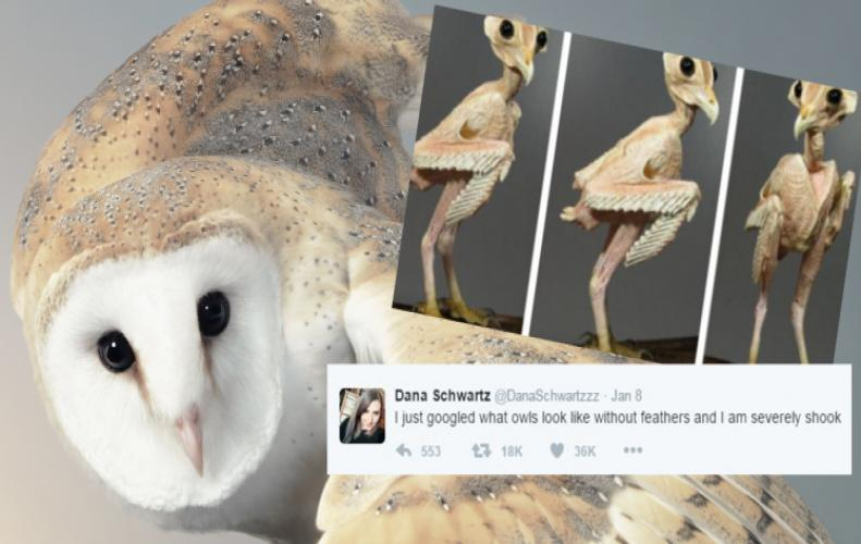 Owl Without Feathers | New Buzz in the Town