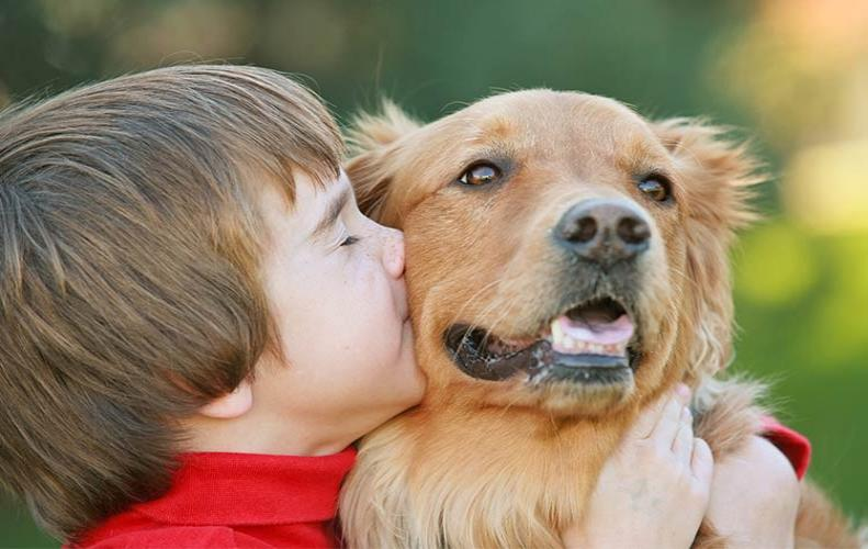 Best Animal Charities that Making a Difference by Working for Animals