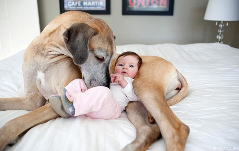 Cute Big Dogs | Adorable Enough to Force You to Adopt them Right Now