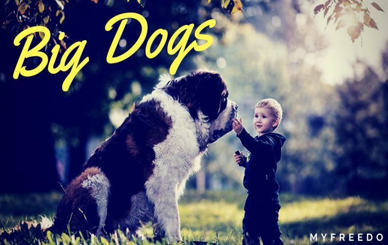 Top 15 Amazingly Adorable Big Dogs