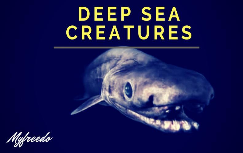 9 Amazing Deep Sea Creatures in The Ocean