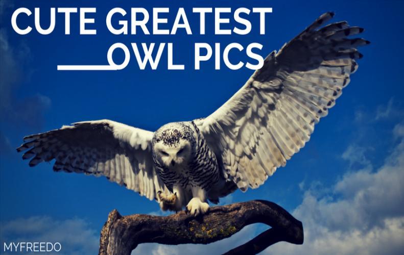 40 Amazing Cute Greatest Owl Pics