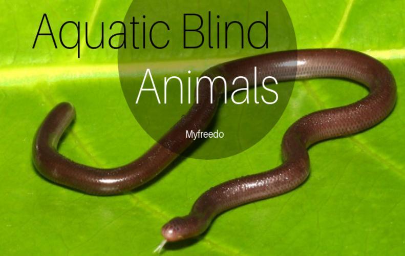 Blind Animals Of Aquatic Life You Can't Imagine