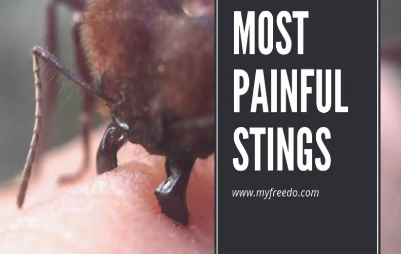 Worlds Most Painful Sting That Hurts a Lot