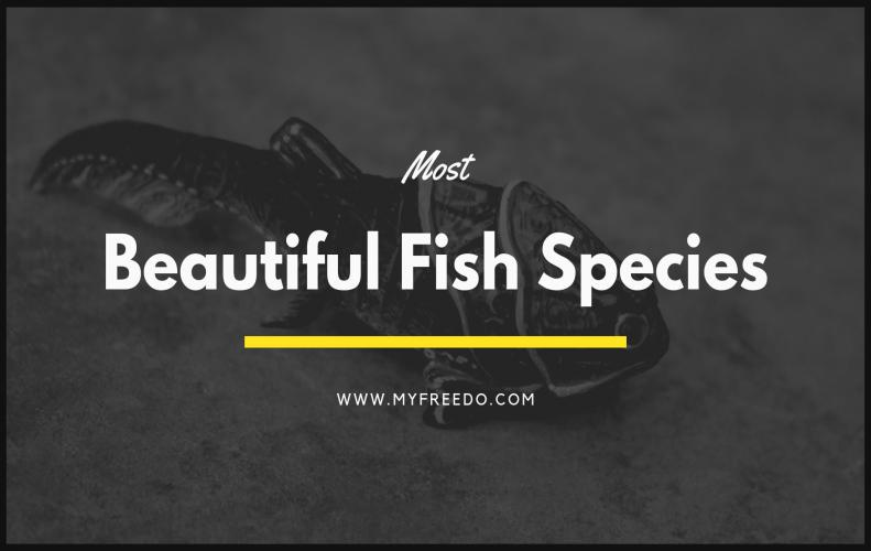 Most Beautiful Fish Species of the World