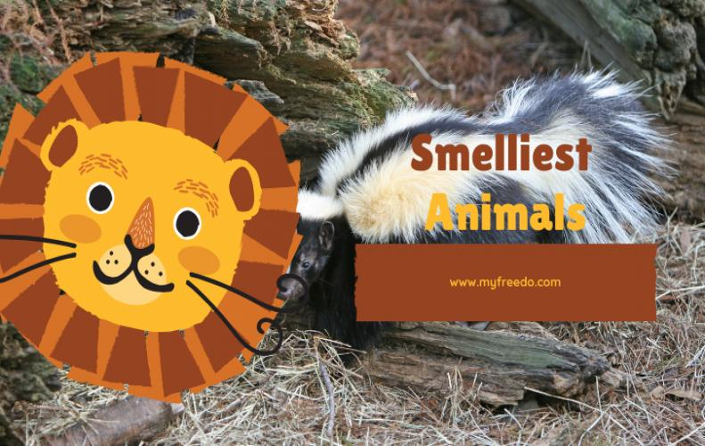 Top 5 Stinking and Smelliest Animal Species of the World