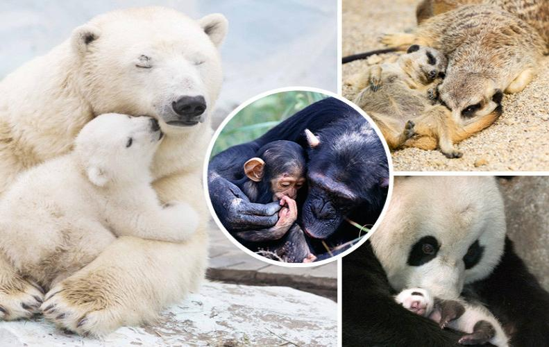 Cute Baby Animals | Cutest thing on the Internet
