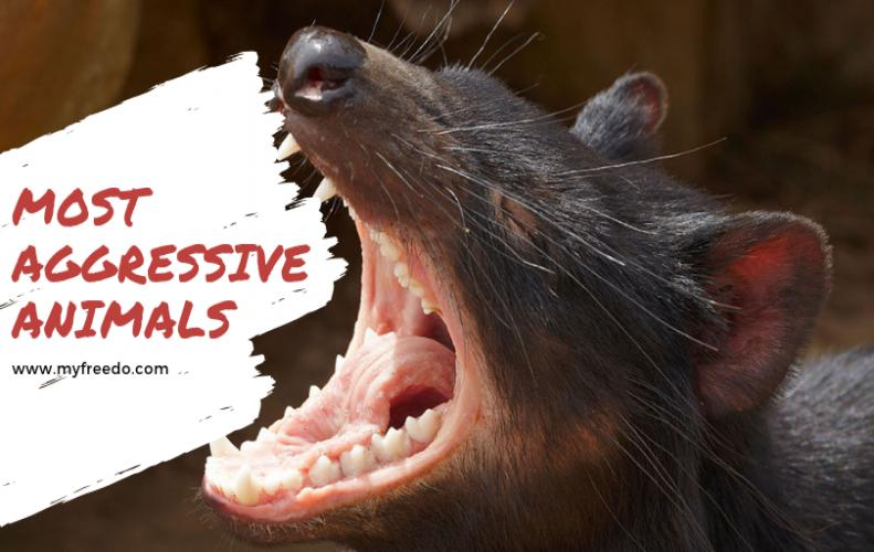 Most Aggressive Animals On Earth