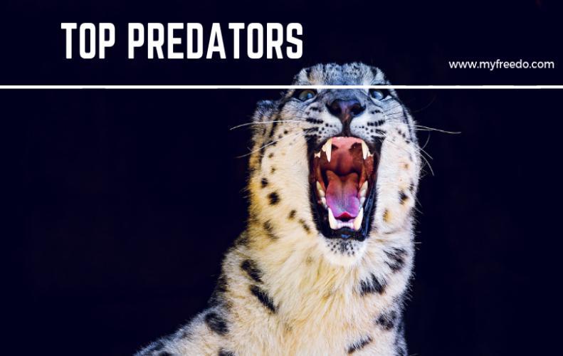 5 Top Predators Of The World