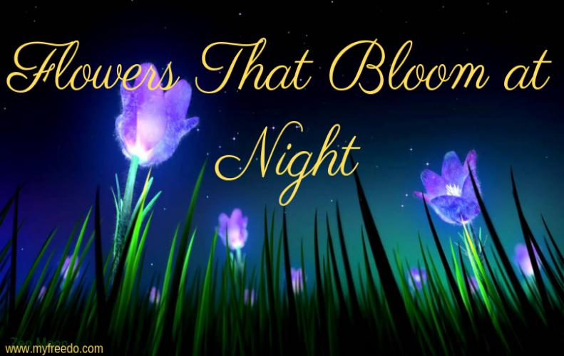 Top 5 Flowers That Bloom at Night