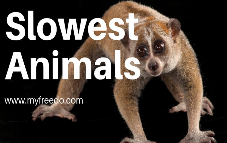 Top 7 Slowest Animal Species In The World