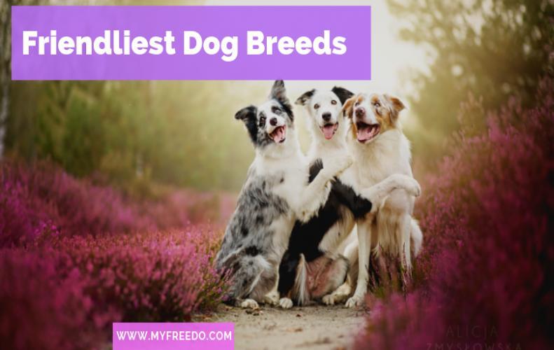 Top 7 Friendliest Dog Breeds On Earth
