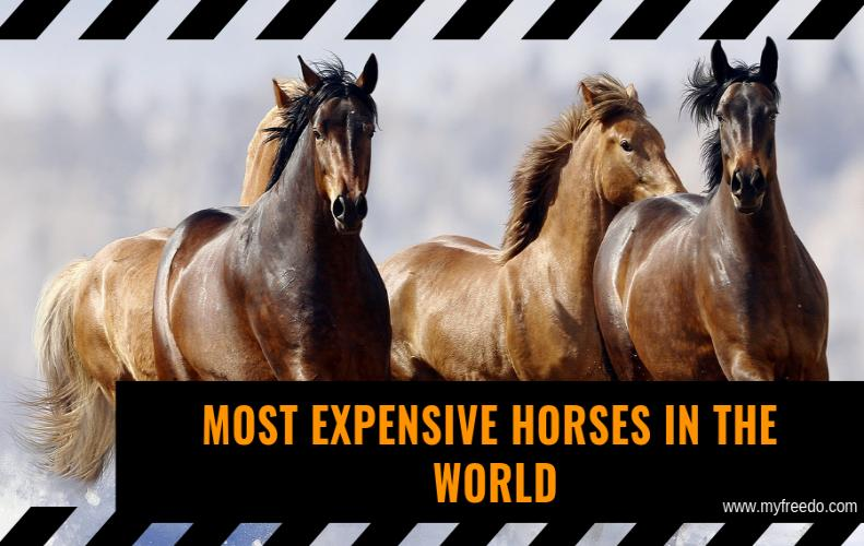 Top Most Expensive Horse in the World 2018