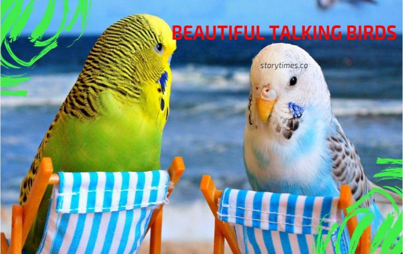 Most Intelligent Talking Birds On Earth...