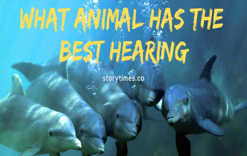 What Animal Has The Best Hearing...