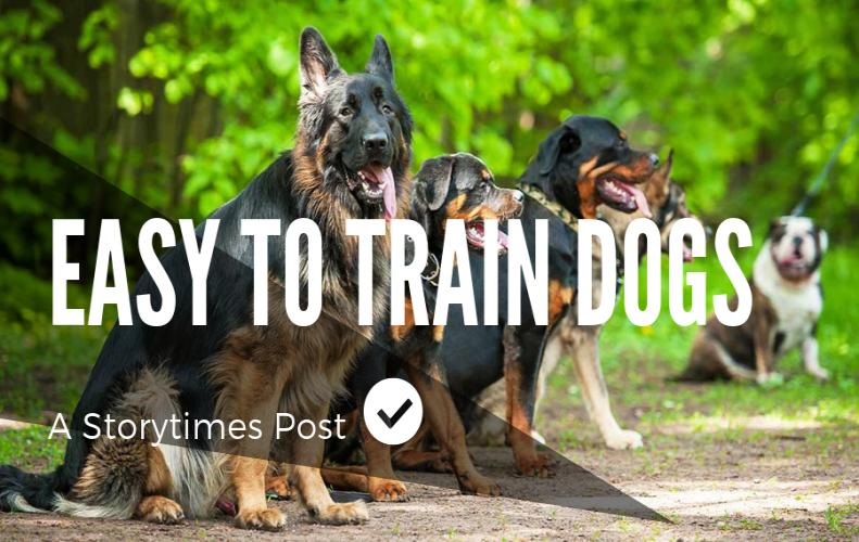 Most Easy To Train Dogs In The World...