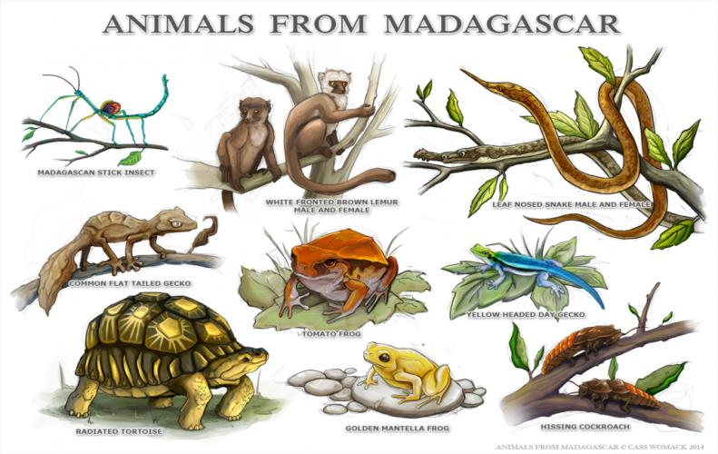 The Top 10 List of Most Famous Madagascar Animals