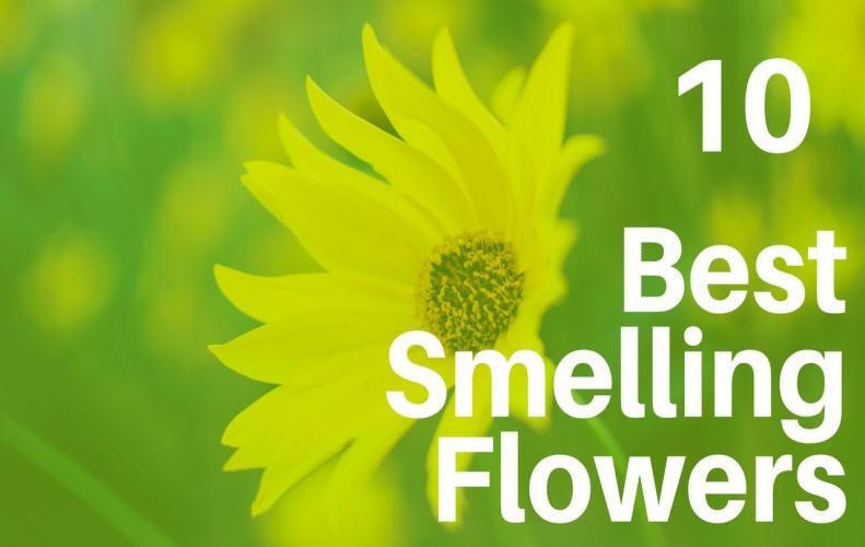 Best Smelling Flowers | The List of Top 10 All Over the World