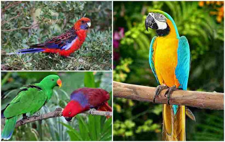 Most Colorful Parrots from All around the World | The List of Top 10