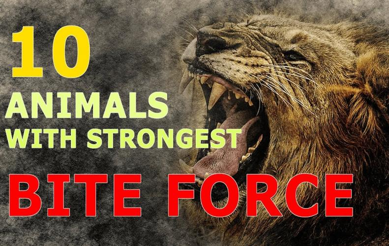 Animals with Strongest Bite Force   The List of Top 10...