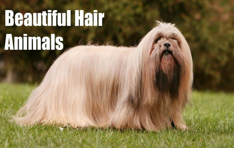 Animals with Long Beautiful Hair | The List of Top 10