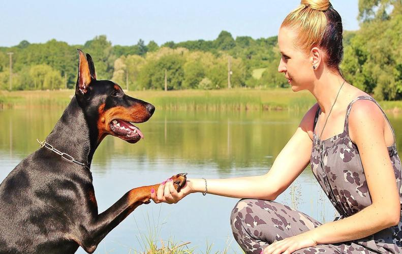 Tips to Keep in Mind to Take Care Of Your Pets