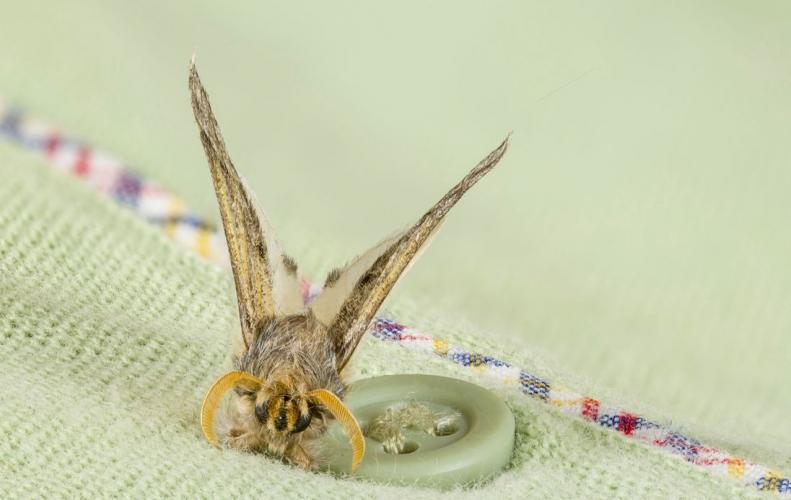 10 Best Tricks to Get Rid of Moths Naturally