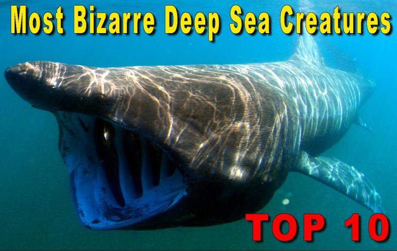 Most Unusual Deep-Sea Creatures | The List of Top 10