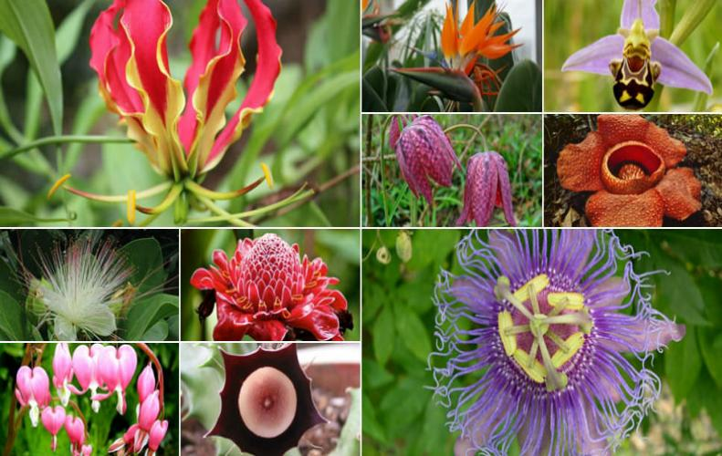 Most Unique and Unusual Flowers in the World | The List of Top 10