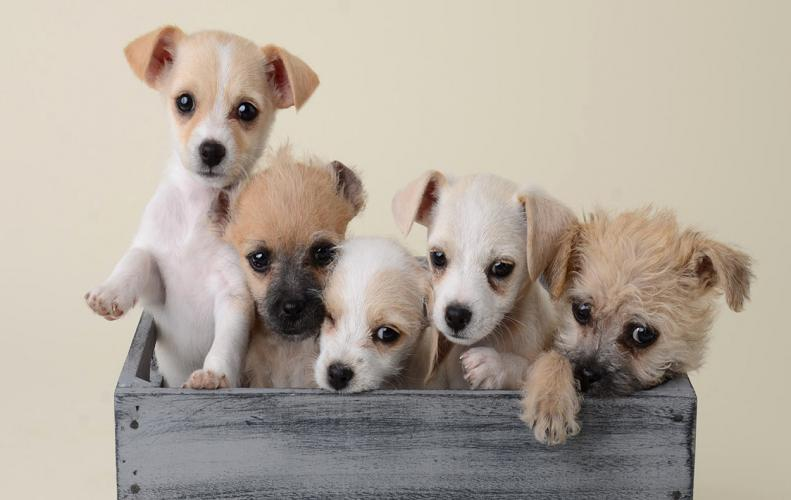Smallest Dog Breeds in the World | The List of Top 10