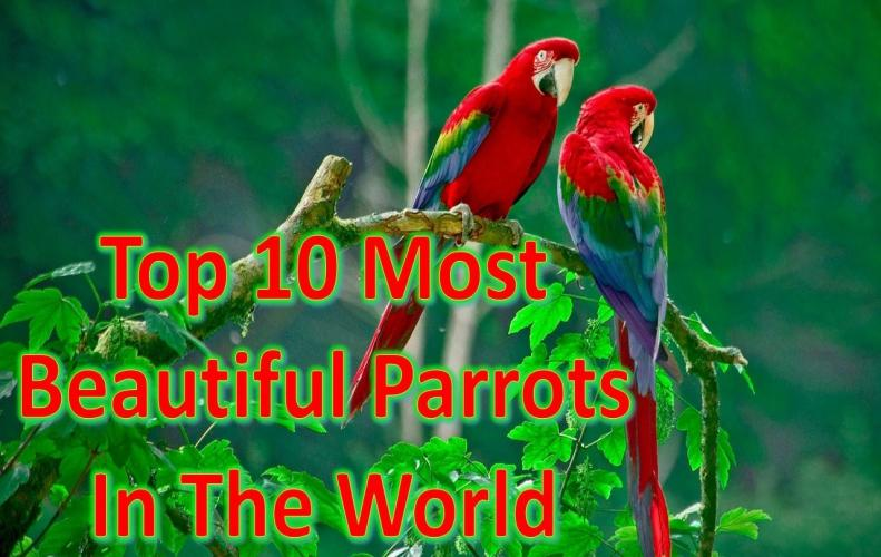Most Beautiful Parrots in the World | The List of Top 10