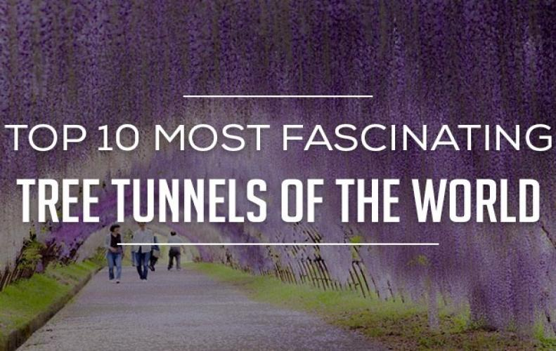 Most Amazing Tree Tunnels in the World | The List of Top 10