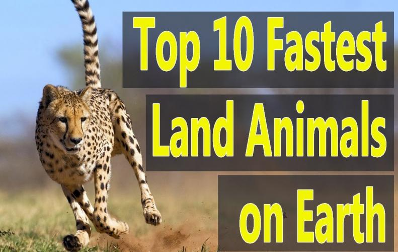 Fastest Land Animals In The World | The List of Top 10