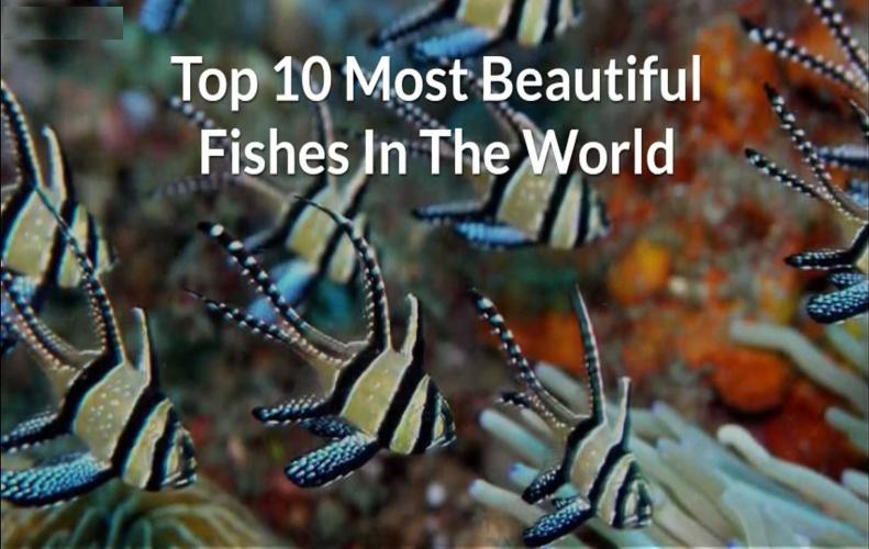 Most Beautiful Fishes In The World | The List of Top 10