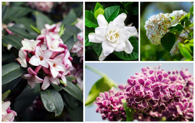 Best Smelling Flowers in the World | The List of Top 10