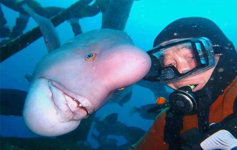 30 साल पुरानी हैं, इस शख्स और इस इंसान की तरह दिखने वाली मछली की दोस्ती