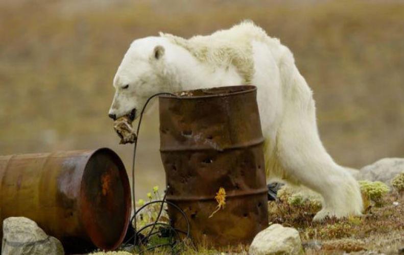 वन्य जीवो की हालत ख़राब होने के पीछे कौन है जिम्मेदार आइये जाने