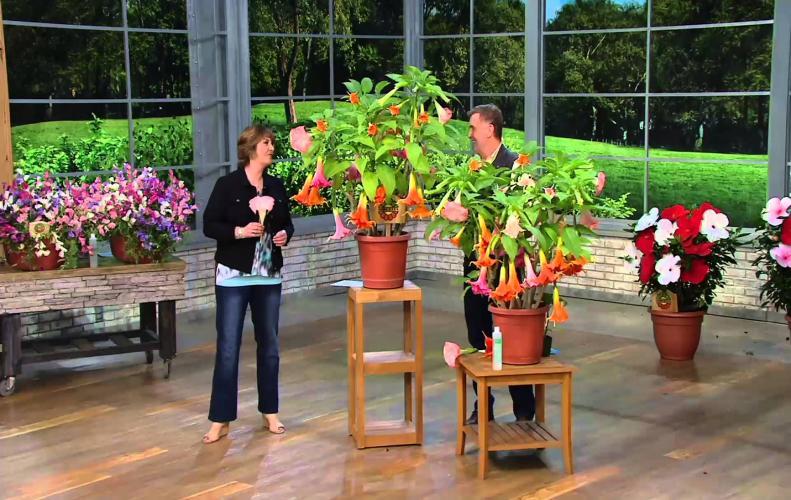 विश्व के सबसे जहरीले पौधे जो मिनटों में ले सकतें है किसी की भी जान