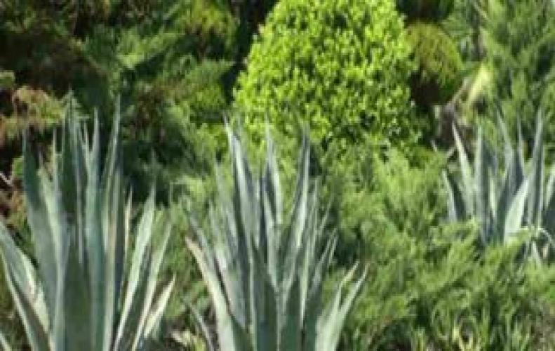 घर के इस छोटे से कोने में उगाये ये पौधे और पाए निरोगी काया