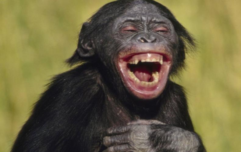 देखिये कुछ तस्वीरें जो कर देगी आपको हसने पर मजबूर...