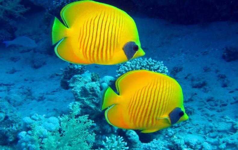 समुद्री दुनिया की कुछ डेंजरस मछलियां जो इंसान को पल भर में मौत की नींद सुला सकती है