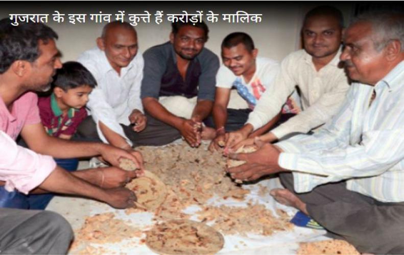 इस गांव में कुत्ते हैं करोड़ों के मालिक पूरा गावं करता है इनकी सेवा...