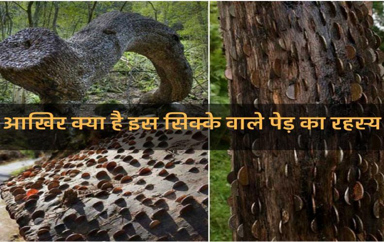आखिर क्या है इस सिक्के वाले पेड़ का रहस्य? | Sikke Vaale Ped Ka Rahasy in Hindi