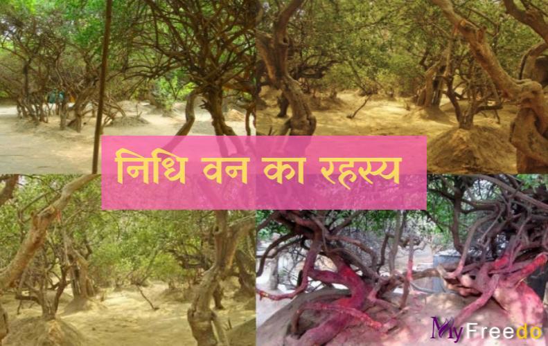 रहस्यमयी निधिवन, जहाँ आज भी आते है राधा-कृष्ण | Mystery Of Nidhivan