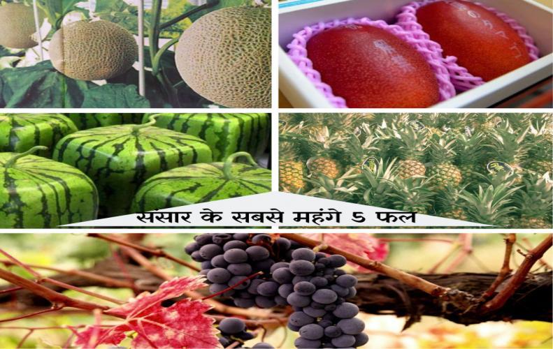 संसार के सबसे महंगे 5 फल | World's Most Expensive Fruits