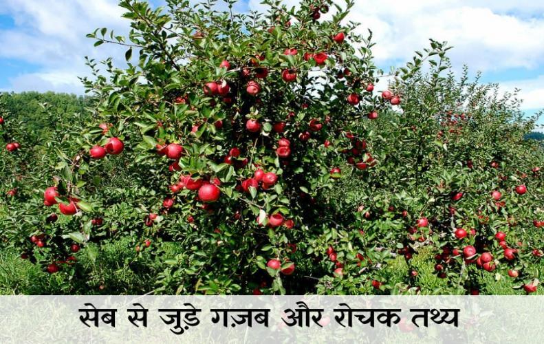 सेब से जुड़े गज़ब और रोचक तथ्य | Interesting Facts About Apple In Hindi